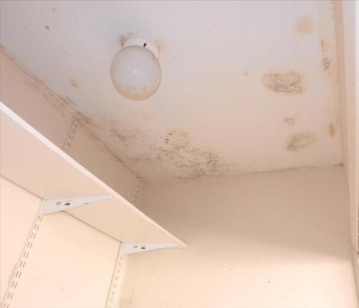 Mold in Laundry Closet in  Trabuco Canyon, CA